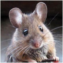 cute_mouse