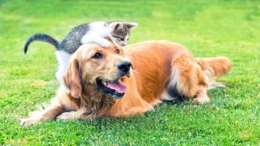 cat-and-dog-play-iStock-583689556-1024x576