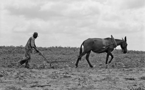 black_farmer_with_mule